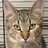 Adopt A Pet :: Macie - Yukon, OK