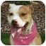 Photo 1 - Pit Bull Terrier Dog for adoption in San Diego, California - Belle