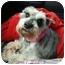 Photo 1 - Schnauzer (Miniature) Mix Dog for adoption in North Benton, Ohio - Princess