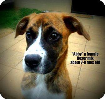 Boxer Mix Dog for adoption in Gadsden, Alabama - Abby