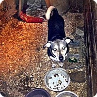 Adopt A Pet :: diesel - Wanaque, NJ