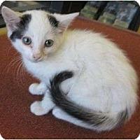 Adopt A Pet :: Mick - Riverside, CA