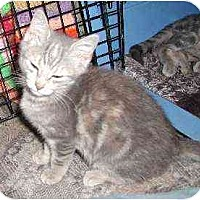 Adopt A Pet :: Trina - Clementon, NJ