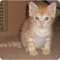 Adopt A Pet :: Rusty - lake elsinore, CA