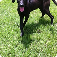 Adopt A Pet :: Sophie - Lewisville, IN