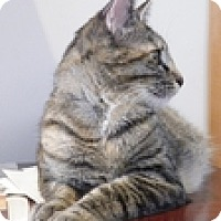 Adopt A Pet :: Nanny Ogg - Vancouver, BC