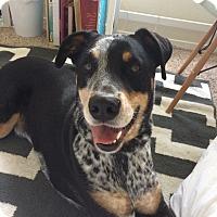 Adopt A Pet :: Hank - Santa Rosa, CA