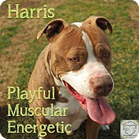 Adopt A Pet :: Harris - Washburn, MO