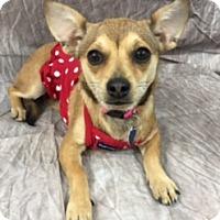 Adopt A Pet :: Aubrey - Lake Elsinore, CA