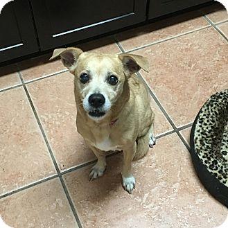 Terrier (Unknown Type, Small) Mix Dog for adoption in Davie, Florida - Nala