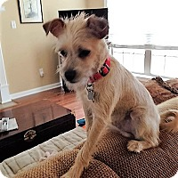 Adopt A Pet :: Loki - North Little Rock, AR