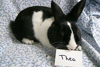 Dutch Mix for adoption in Harrisburg, Pennsylvania - Theo