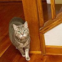 Adopt A Pet :: Mary Jane - Trenton, NJ