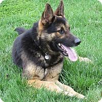 Adopt A Pet :: DANNY - Nampa, ID