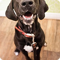 Adopt A Pet :: Dixie - Red Wing, MN