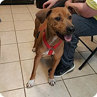 Adopt A Pet :: Penny - Hammond, LA