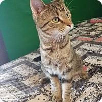 Adopt A Pet :: Oliver - Fairmont, WV
