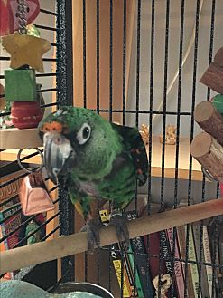 Parrot - Other for adoption in Punta Gorda, Florida - Baby