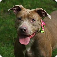 Adopt A Pet :: Wren - Lafayette, IN