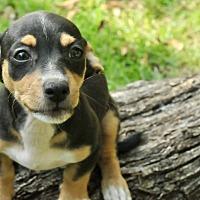Adopt A Pet :: Marcus - San Antonio, TX