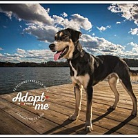 Adopt A Pet :: Spike - Potomac, MD
