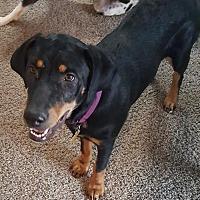 Adopt A Pet :: Peatree - Salt Lake City, UT