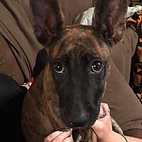 Adopt A Pet :: Arcadia - Portland, ME