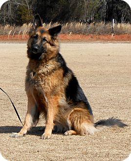 German Shepherd Dog Mix Dog for adoption in Dacula, Georgia - Maya
