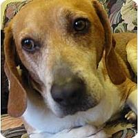 Adopt A Pet :: Iggy - Portland, OR