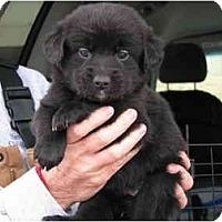Adopt A Pet :: Oatmeal - Albany, NY