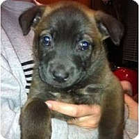 Adopt A Pet :: Rhino - Orlando, FL
