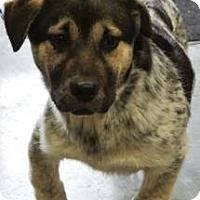 Adopt A Pet :: Marlo - Albert Lea, MN