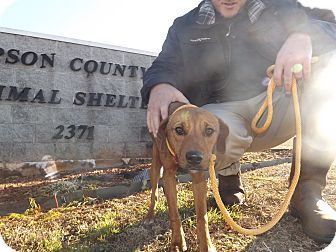 Hound (Unknown Type) Mix Dog for adoption in Thomaston, Georgia - Simon