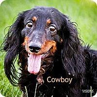 Adopt A Pet :: Cowboy - Cedar Rapids, IA