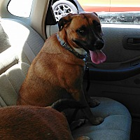 Adopt A Pet :: Gretchen - Winchester, VA