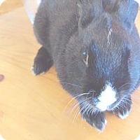 Adopt A Pet :: Sassy - Maple Shade, NJ
