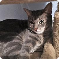 Adopt A Pet :: Darius - North Highlands, CA