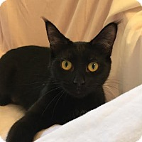 Adopt A Pet :: Yuri 170375 - Atlanta, GA
