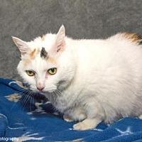 Adopt A Pet :: Miss Butterworth - Neenah, WI