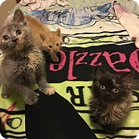 Adopt A Pet :: Jane - Chicago, IL