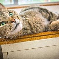 Adopt A Pet :: Trouble - Corinne, UT