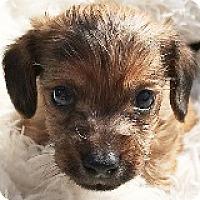 Adopt A Pet :: George Springer - Houston, TX