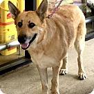 Adopt A Pet :: Olive 5463