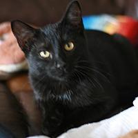 Adopt A Pet :: Maui - Attalla, AL