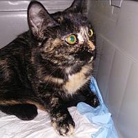 Adopt A Pet :: coutesy listing -melinda - wayne, MI