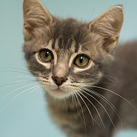 Adopt A Pet :: SPRING - BEST SEASON OF ALL! - Plano, TX