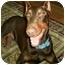 Photo 2 - Doberman Pinscher/Doberman Pinscher Mix Dog for adoption in New Orleans, Louisiana - Rusty