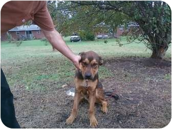 Shepherd (Unknown Type) Mix Puppy for adoption in Bunn, North Carolina - Charlie