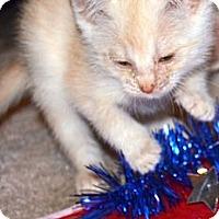 Adopt A Pet :: Kyle - Xenia, OH