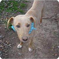 Adopt A Pet :: Shane - Eden, NC